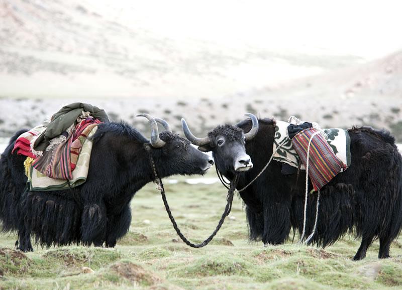 The Saga to Saga – Episode 5 of Isha Kailash 2010 Travel Journal